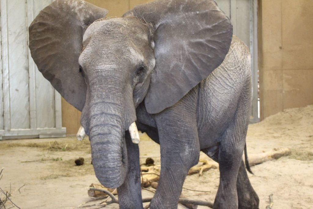 Animal rights group blasts Omaha Zoo about elephant care