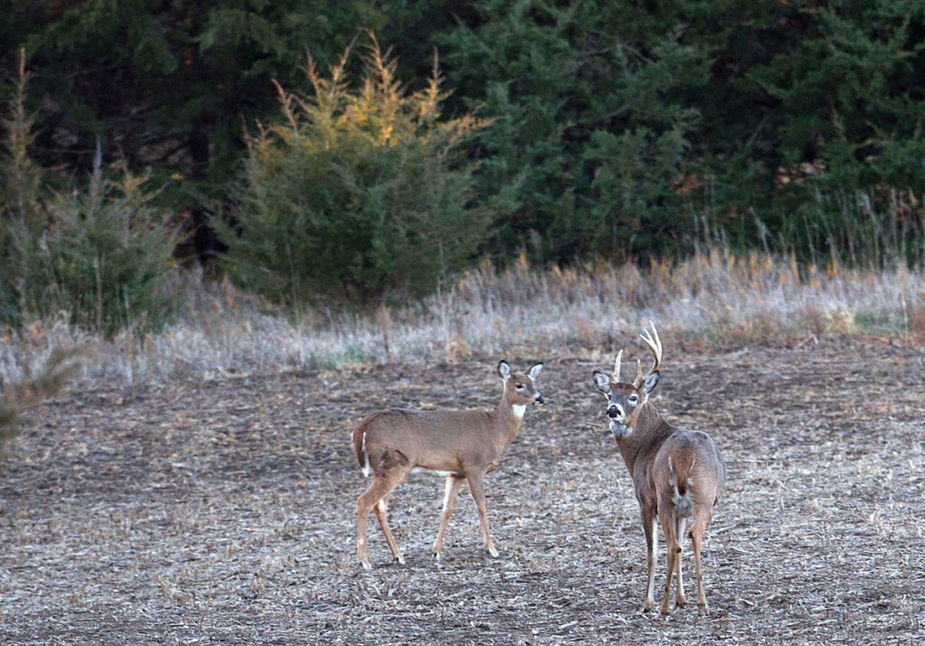 Sampling of deer results in 203 positives for chronic wasting disease