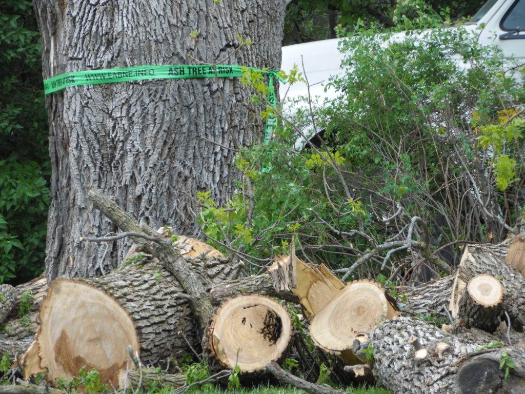 Fremont Tree Disposal Site Opens June 1