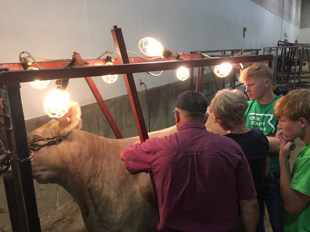 Fair's Beef Show Encourages Intense Competition