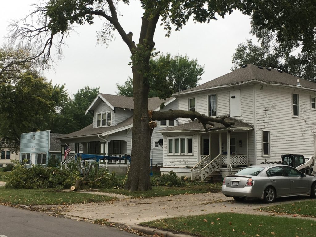 Tree Branch Hits House; Bees Swarm Inside