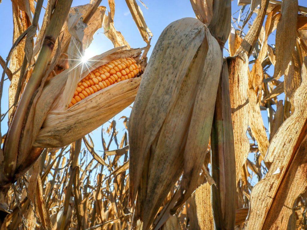 Missouri farmer charged in $140M organic grain fraud scheme involving Nebraska farms