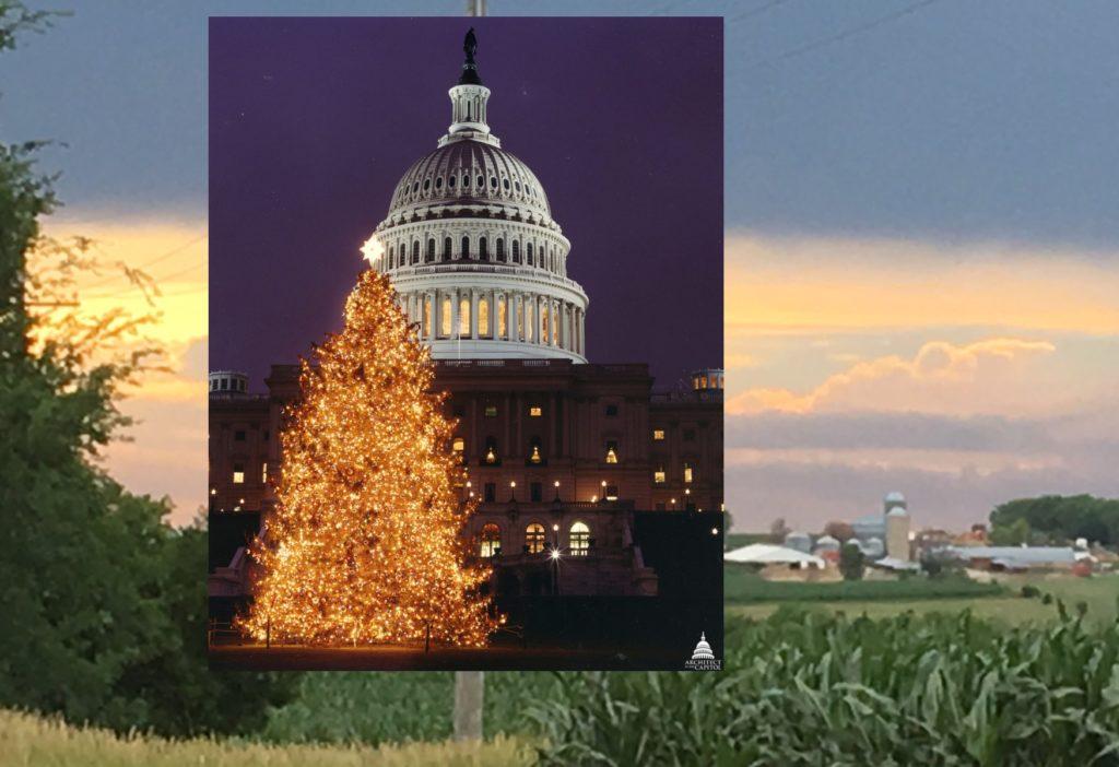 US Capitol Christmas Tree Coming To Nebraska City