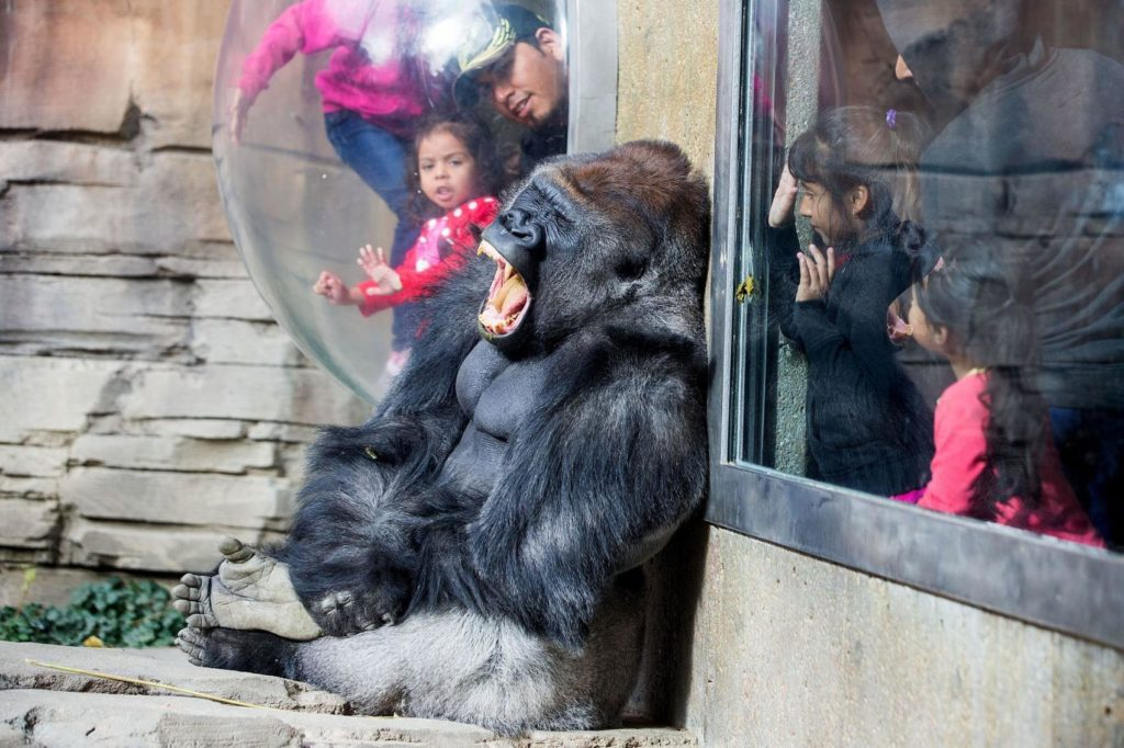The Henry Doorly Zoo is offering free admission for kids during the week after Christmas