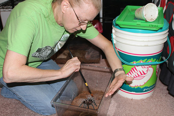 'They're not bad at all': North Platte woman collects tarantulas, scorpions and centipedes