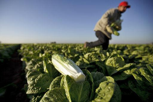 Emails show FDA worry about water testing after romaine outbreaks