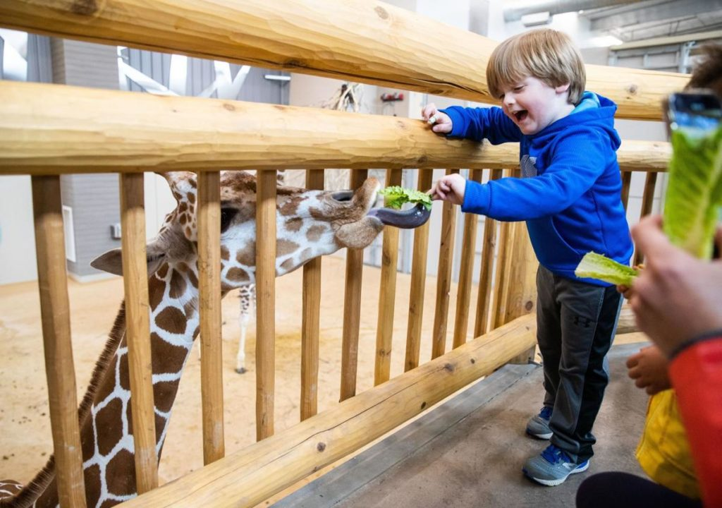 Giraffes and tigers join Lincoln Children's Zoo as part of $24 million expansion