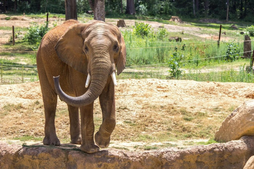 African elephant to be added to herd at Henry Doorly Zoo