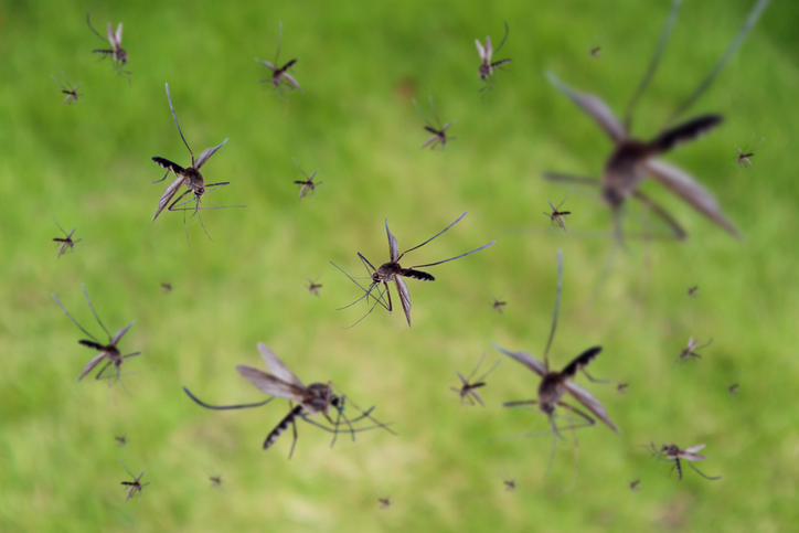 New insects and ticks work their way to Nebraska in time for summer