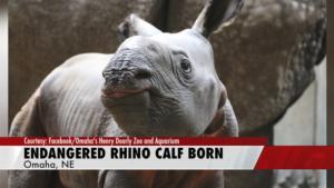 Zoo announces historic birth of endangered Indian Rhino calf