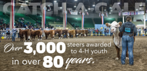 2020 National Western 4-H Catch-A-Calf Applicants Wanted