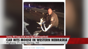 NSP: car hits moose in western Nebraska