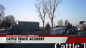 Cattle Truck Crash near Holdrege