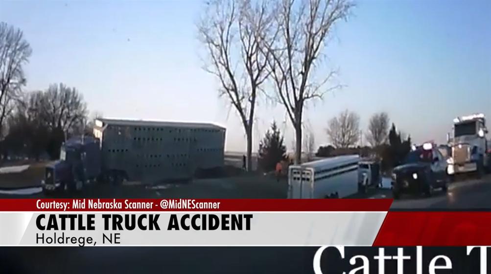 Cattle Truck Crash near Holdrege