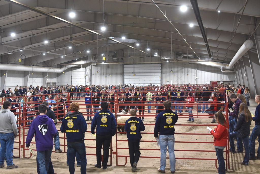 Wayne FFA Junior, Senior Teams Among Nearly 500 Students Who Attended District Livestock Judging Competition