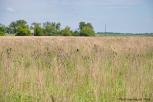 CRP Grassland Sign-Up Is Currently Available At FSA Office