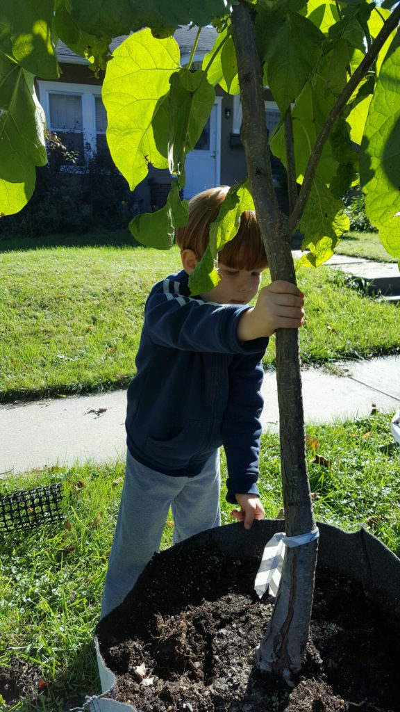 Deadline To Apply For 2020 Tree Funding Grants Is July 31, Communities Given Landscape Improvement Opportunity