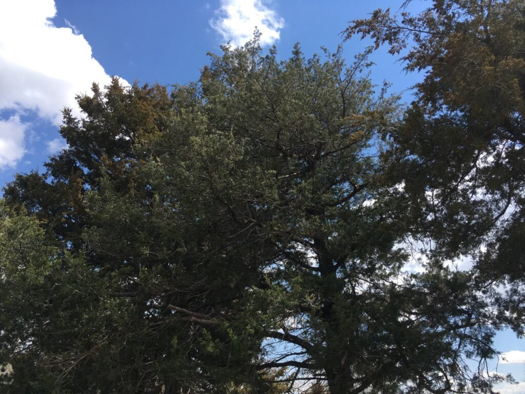 Broken Bow Offering Free Tree Dump for Storm Limbs through Saturday