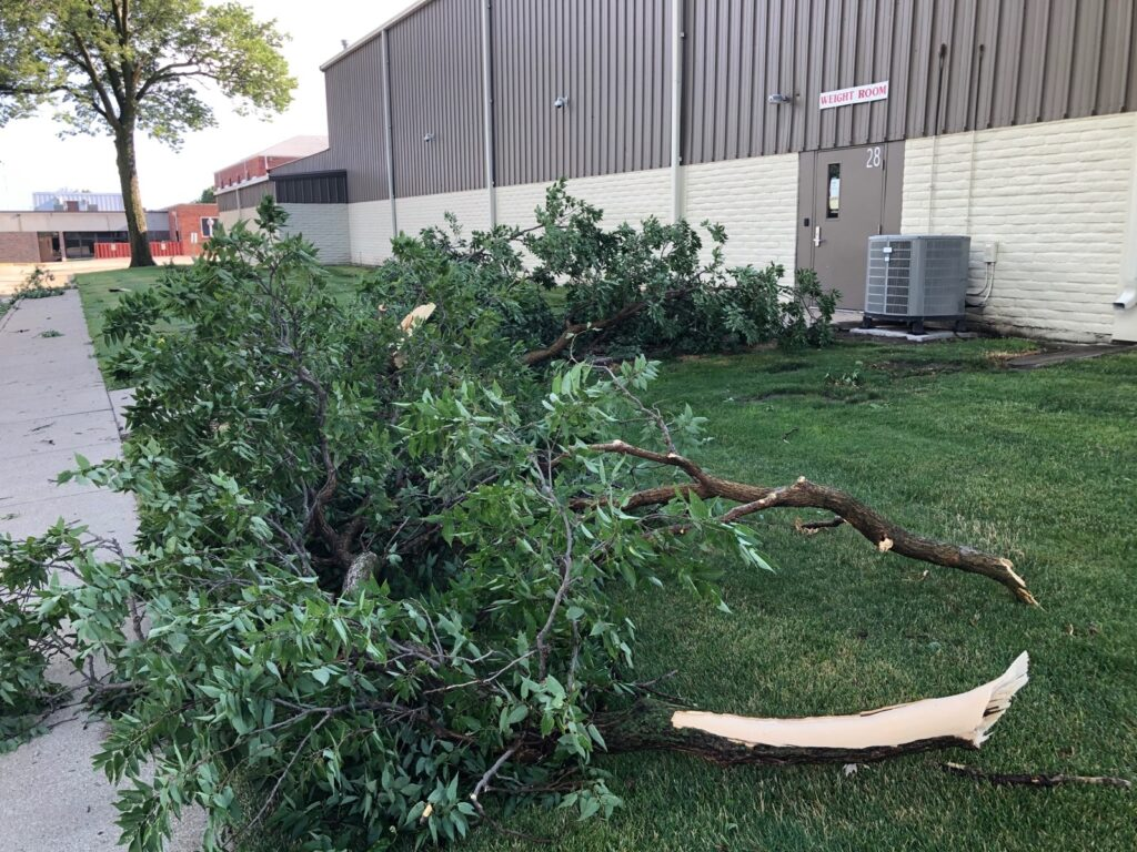 Free Tree Dump through July 14 Following Weekend Storms
