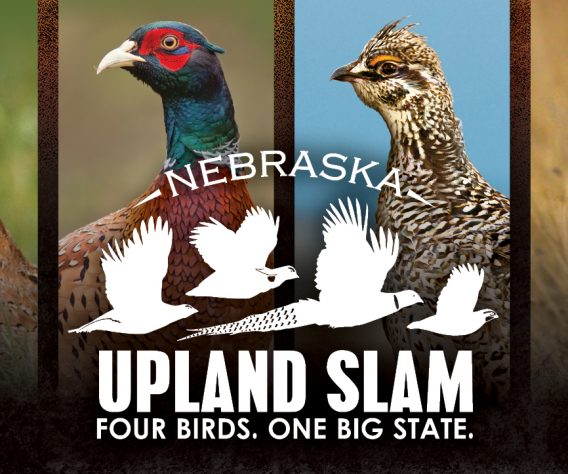 NGPC: Nebraska Hunters Aiming For Upland Slam And Duck Slam This Fall