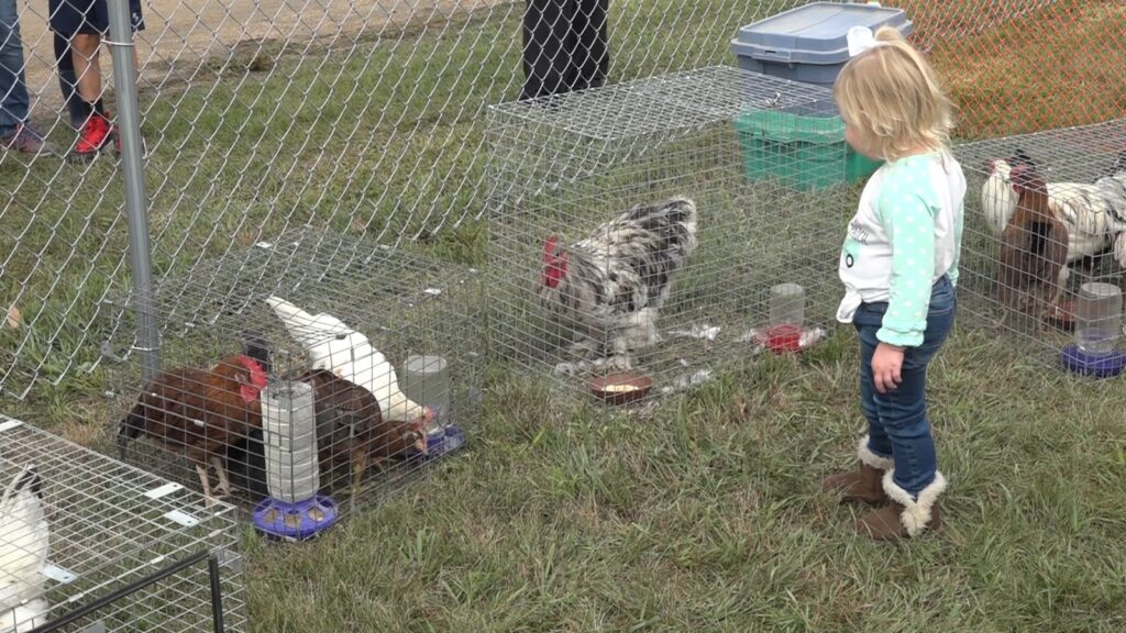 Chicken Show Takes Over Saturday, Contest Winners Posted