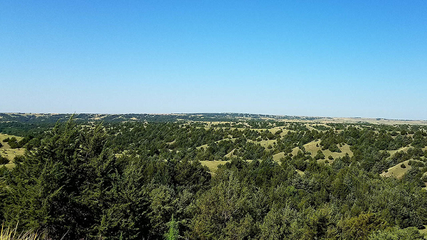 Deadline Approaching To Register For Grasslands Programs In Taylor & Thedford