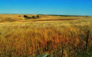 Nebraska Extension Seeking Input From Ranchers On Design Of Grassland Conservation Programs