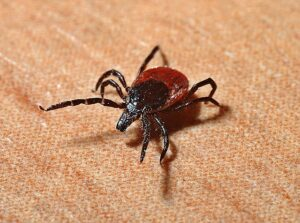 'Tis the Season for Tick-borne Diseases in Nebraska