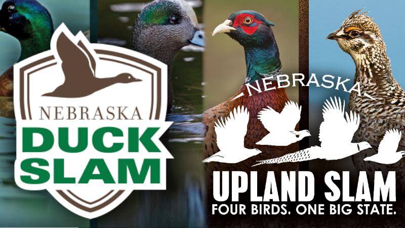 Dove Season, Duck And Upland Slams Begin Sept. 1