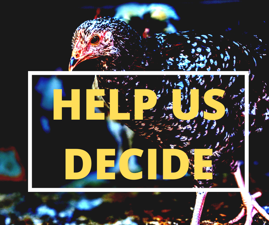 Public Input Needed In Voting For 42nd Annual Wayne Chicken Show Theme