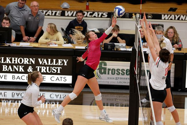 MSU Moorhead No Match For #6 WSC, Wildcats Secure Seventh Straight Win
