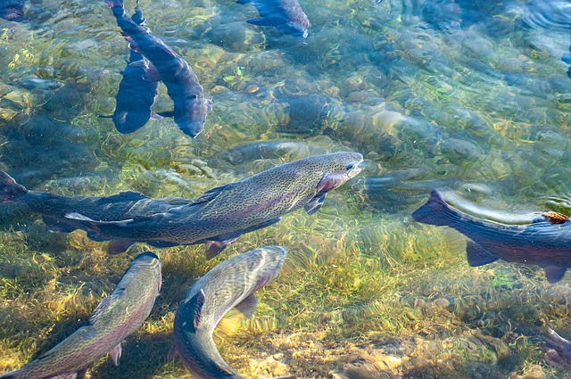NGPC Rainbow Trout Stocking Underway At State Parks And Ponds